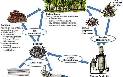 Coffee & Biochar White Paper Now Available